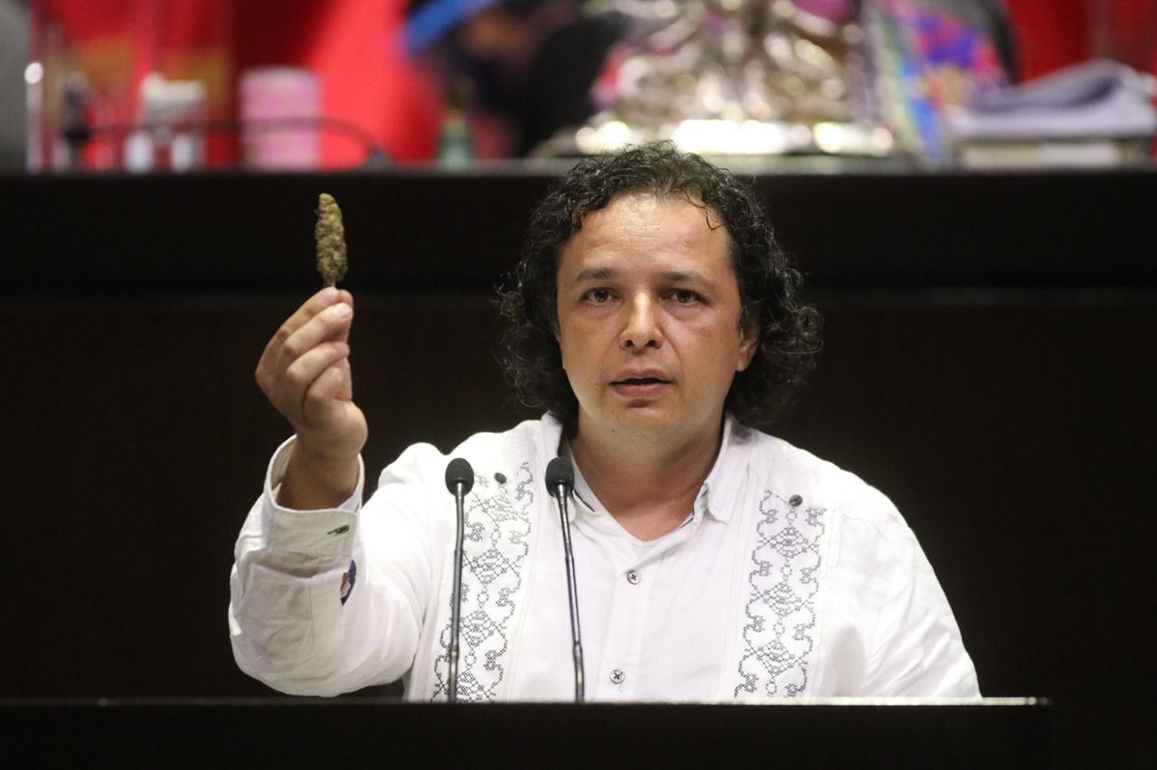 Hirepan Maya protege la sustentabilidad e innovación en producción de  cannabis | Urbis TV Morelia